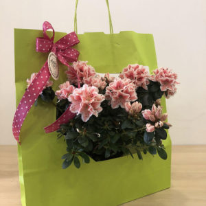 Azalea-in-shopper---Emmeplati-(1)